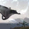 優雅に飛ぶ!シマエイマウントついに入手!(FF14)「コウジン族デイリー報酬」